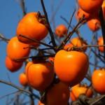 干し柿の作り方、干す期間はどのくらい?皮のむき方から完成まで