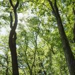 カブトムシの捕まえ方!樹液が出ている木の場所を探せ!