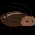 ゴキブリの特徴から部屋に出ないようにするための対策はあるのか!?